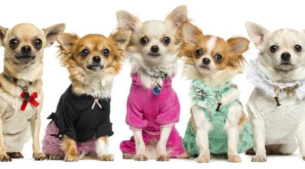 cachorros-fashion